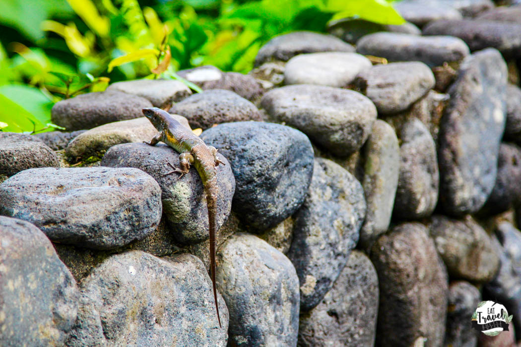 gecko on grounds at alila ubud