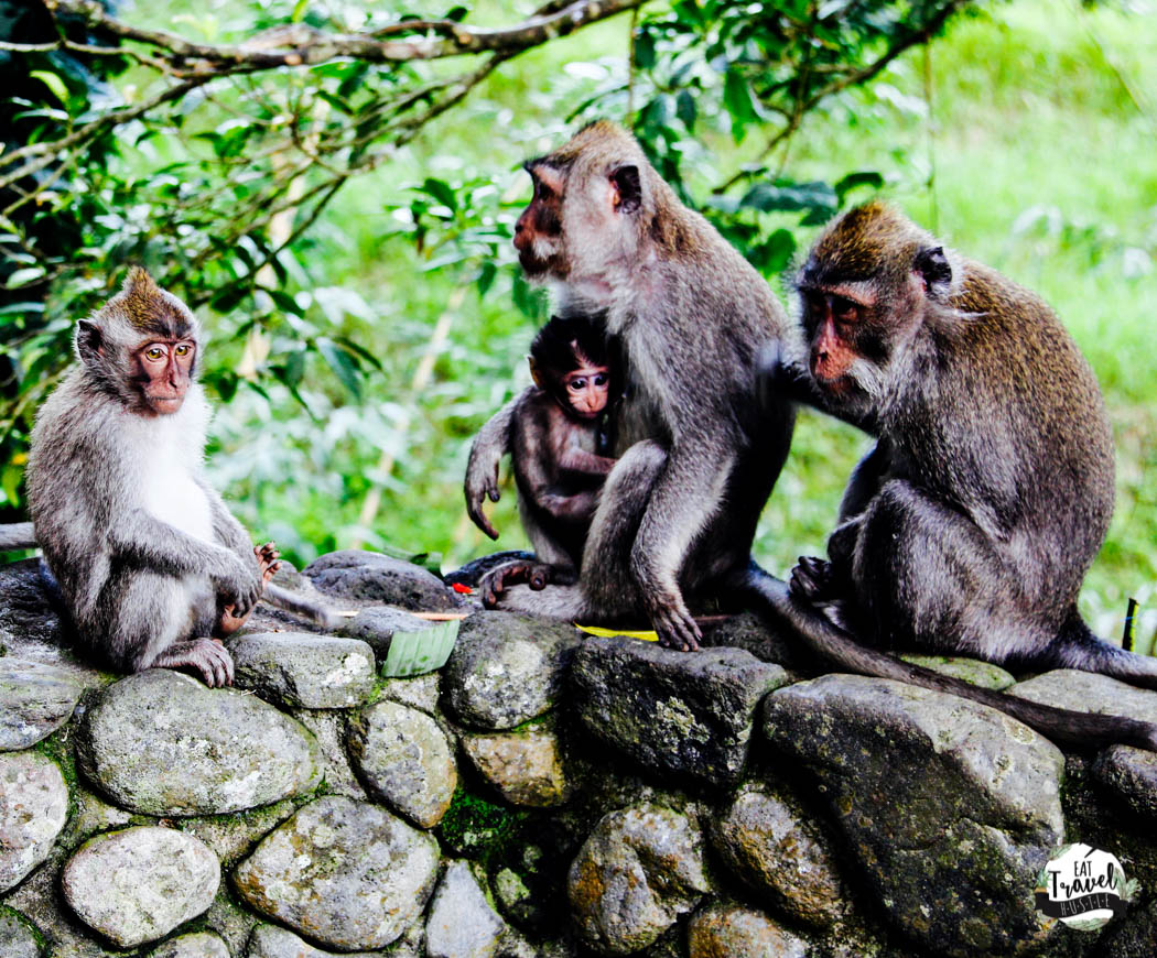 monkeys at alila ubud